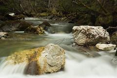 ponturin détail (christophebiget) Tags: eaux ponturin sauvages