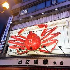 La menoría de Japón 1 (XULIANA617) Tags: japón cangrejo