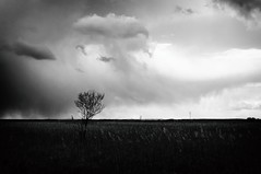 *** (noinchi) Tags: light rain tree clouds spring minimal mood bw black white blackandwghite d90 wilderness storm atmosphere