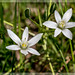 fiori_0236