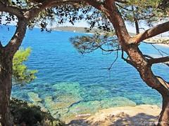 Özdere Sevgi Parkından (B A Y S A L) Tags: özdere çukuraltı menderes izmir turkey türkiye sea seaside tree pine ercanbaysal summer tourism ege aegean blue cliff rocky beach fish