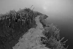 peninsula (Mindaugas Buivydas) Tags: lietuva lithuania bw december winter fog mist delta nemunas nemunasdelta river mystery mood moody dark darkness sadnature thismorning fogandsun morning whiteinblack frost cold mindaugasbuivydas