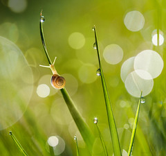 morning light (marianna_a.) Tags: morning light 6am bokeh snail wet dew drop droplets green macro animal f64 p5230097 mariannaarmata