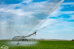 Irrigation circle end gun spraying (Washington State Department of Agriculture) Tags: circle field irrigation spring sprinkler water