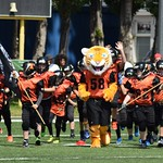 U11 Tigers vs. Dragons 14.5.17