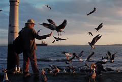 Dinner time : ) (Ninoo Vita) Tags: nikonf100 nikon f100 nikkor11850mmseriesepancake nikkor naturebynikon lisbon lisboa dinner sunset birds seagulls river tagus riotejo praçadocomércio caisdascolunas colorfoto portugal terreirodopaço