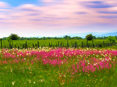(Alin B.) Tags: alinbrotea nature spring may rural landscape meadow land country romania grass flower summer