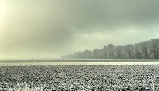 Bare fields in the fog.