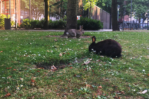 Rotterdam city rabbits