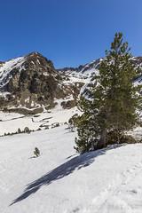 Basses del Siscaró, Principat d'Andorra (kike.matas) Tags: canon canoneos6d canonef1635f28liiusm kikematas bassesdelsiscaró valldincles canillo andorra andorre principatdandorra pirineos paisaje montañas arbol nieve nature senderismo lightroom4 андорра