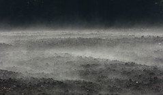 Vapor caused by the warming up of the soil after a cold night (joeke pieters) Tags: 1340040 panasonicdmcfz150 damp vapor akker field