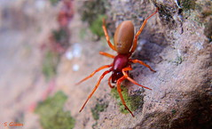 spider in the garden (gshaun12) Tags: spider nature fantasticnature bokeh macro macrodreams insects upclose rock orange