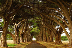 Cypress Tree Tunnel (jhagani13) Tags: tunnel trees cypress california pointreyes nationalseashore green path road explore landscape jasonhaganiphotography canonphotography amateurphotography