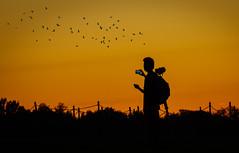 sunset in DC (m_hamad) Tags: sunset sunday silhouette birds nature naturebeauty greatnature explore nationalgeographic park dazzlingshot wildlife beauty canon usa 7dmkii dc blinkagain ultimateshot supershot washington washingtondc washdc wash washingtonmonument washingtonmonumentatnight
