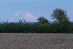 Mount Rainier (mfeingol) Tags: washington skagit skagitwildlifearea wdfw mountrainier alpenglow field