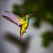 First try at a hummingbird shot
