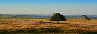 Laguna Negra, Rocha, Uruguay
