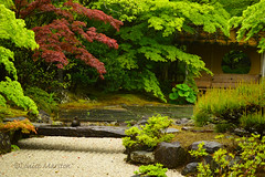 Japanese garden in the rain (louisemarston) Tags: japan temple matsushima entsuintemple