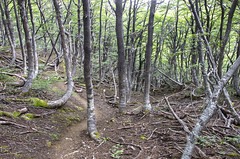 In the woods (Imthearsonist) Tags: forest woods cerrocastillo trekking path sendero bosque naturaleza regiondeaysen surdechile chile