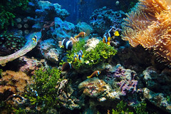 Underwater scene (UNDPPH) Tags: animal aquatic background botany bubbles colony colorful coral dive dream eilat exotic exploration explore fiji fish flora hardcoral holiday life marine nature ocean places red reef saltwater sea tourism travel tropical underwater vacation water