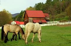 Apple Hill (stevel2112@rocketmail.com) Tags: vermont vt barn redbarn greenmountains horses whitefence
