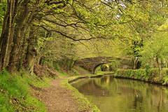 The Canal (maureen bracewell) Tags: ellesmere shropshire bridge canal reflections spring track trees landscape green shropshireunioncanal maureenbracewell canon towpath walking countryside england uk