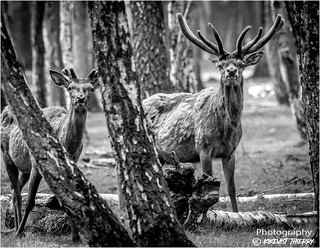 Animaux en foret