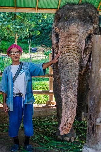 Thailand - Bangkok - Elephants -5.jpg