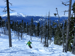 Mike skis the trees (Ruth and Dave) Tags: mike michael skier whistler whistlerblackcomb blackcomb crystalzone trees treerun offpiste skiing