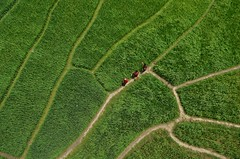 Peope on the green land! (ashik mahmud 1847) Tags: bangladesh beautiful landscape green line aerial people aerialphotography