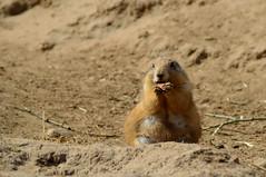 Wildlands Advanture Zoo Emmen (l-vandervegt) Tags: 2017 nederland netherlands holland niederlande drenthe emmen wildlands zoo dierentuin