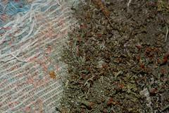 new material, new design (dustaway) Tags: clagirabaforestreserve sequeensland queensland australia lichen fabric seatcushion anthropocene waste rubbish dumped