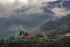 Into the fog (Maurizio Longinotti) Tags: fog gattorna fontanabuona valfontanabuona valley colline hills appenninoligure house caseallaligure alberi trees liguria italia italy