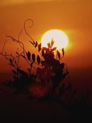 Sunset (anavaz1) Tags: love loveit sunset nature skyporn mata montanha good goodvibes fotografia photo brasil mountain paz beautiful vibe