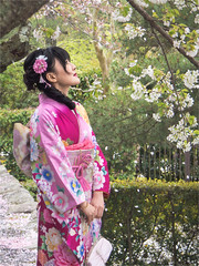 Sakura season (Kevin Lloyd) Tags: 1250mm chionin japan kyoto omdem5 olympus blossom candid cherryblossom gaze girl kimono pink portrait portraiture sakura temple traditional traditionaldress travel travelphotography trees kyōtoshi kyōtofu