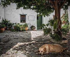 La hora  de la siesta. (Javier Martinez de la Ossa) Tags: javiermartinezdelaossa castellardelafrontera españa cádiz andalucia perro siesta spain
