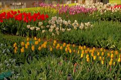 Keukenhof (TeunisHaveman) Tags: keukenhof flower tulip hyacinth holland zuidholland garden park