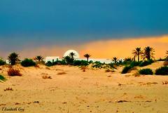 Tunisia 099 (Elisabeth Gaj) Tags: elisabethgaj tunisia afryka travel natyr nature trees