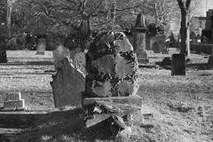 _IAW9352 (IanAWood) Tags: lbofbrent london londoncemeteries nikkorafs58mmf14g nikondf walkingwithmynikon willesden willesdennewcemetery