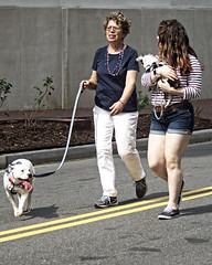 Dog Walkers (DASEye, Thank you for the 2 Million Views) Tags: daseye davidadamson nikon nato parade norfolk virginia dog walking walk dogwalker walkingyourdog natodays natodaysparade