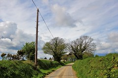 My local lane (JulieK (enjoying Spring in Co. Wexford)) Tags: htt htmt 117picturesin2017 road lane telegraphtuesday telegraphpole trees countryside hedgerow wexford ireland irish canoneos100d scenic outdoors