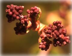 Nurture (Kens images) Tags: growth new beginninga flowers gardens macro delight seed seasons hobby brown