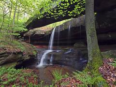 The Secret Of The Bridge (Bill Fultz) Tags: rockbridge ohiostatenaturepreserve waterfall ohio naturalbridge sandstonearch hockinghills hockingcounty logan spring