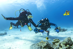1804 14a (KnyazevDA) Tags: disability diver disabled diving padi undersea owd underwater redsea buddy handicapped aowd amputee travel scuba
