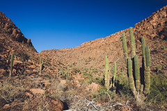 Isla Espiritu Santo (dataichi) Tags: cactus desert red rocks canyon island espiritu santo sea cortez baja california mexico sur nature travel tourism destination outdoors landscape