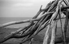 (toulouse goose) Tags: film kodak tmax 100 35mm canon eos elan7 ef50mm18 blackandwhite d76 epson v500 grandbend beach driftwood lakehuron