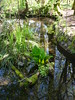 Finnies garden pond (niftyniall) Tags: britishcolumbia essondale riverviewhospital coquitlam