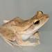 My friend Froggy              XOKA4001s