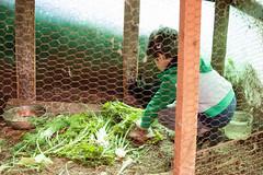 140417-finale_038 (emanueleronchi) Tags: finaleligure gianni liguria agriturismo coniglio famiglia primavera rurale tartaruga vacanze