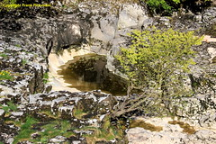 River Rock Pool (Lord Skully) Tags: limestone water tree sapling leaves rocks greenery flowers spring springtime may 2017 outdoor outdoors frankpickavant geotagged canoneos daytime river thedales yorkshiredales linton nationalpark craven england britain britishisles europe uk unitedkingdom rocky naturalbeauty nature freshwater naturalpool landscape whiterock